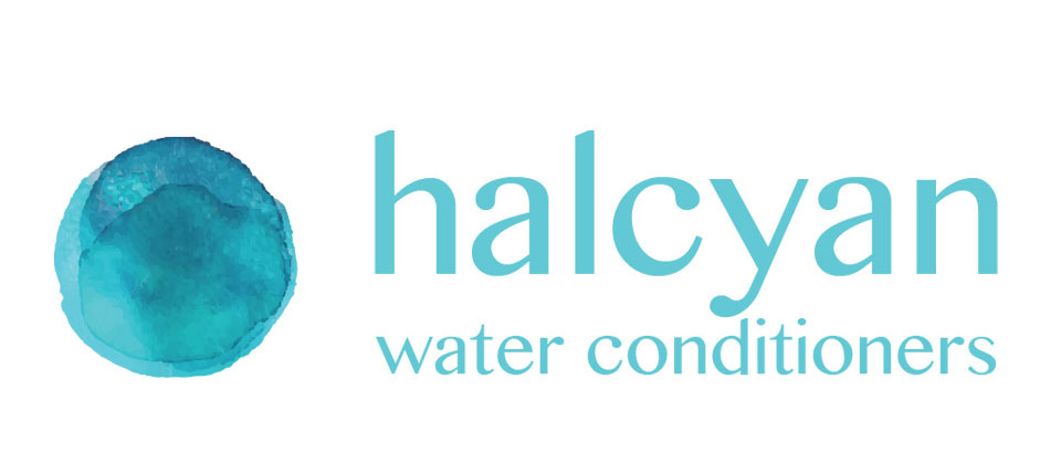 halcyanhead2